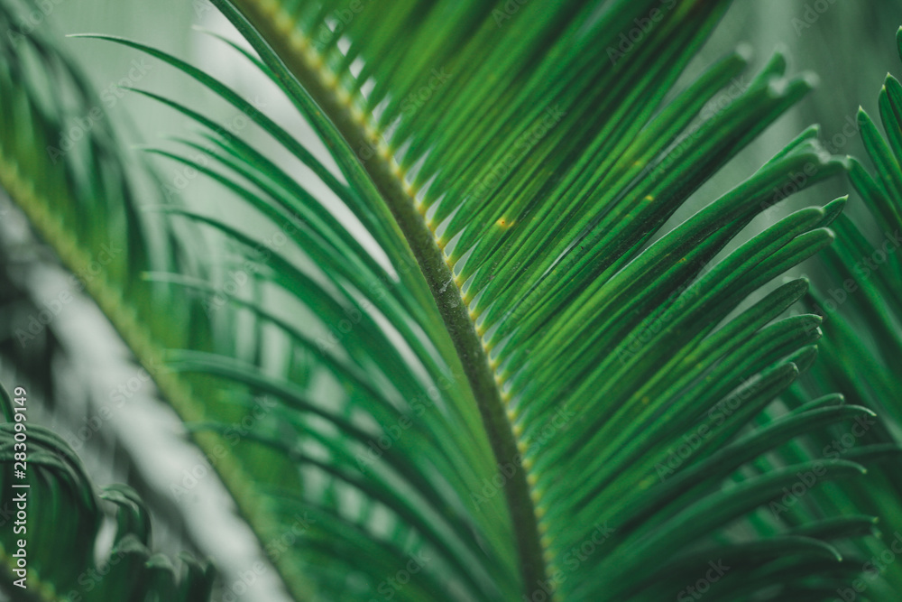 Fototapety, obrazy: the green leaf nature wallpaper