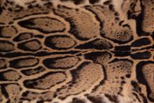 Vintage Clouded Leopard Fur