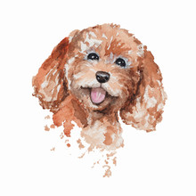 Cute Smiling Redhead Poodle Dog Portrait. Watercolor Hand Drawn Illustration