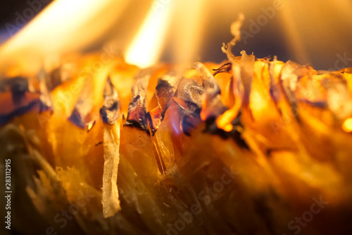 Bonfire ignition burning. Material for igniting Canvas Print