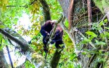 Low Angle Shot Of A Monkey Wal...