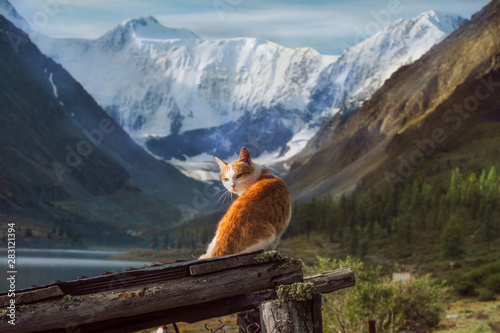Photo Red cat on a background of Belukha Mountain