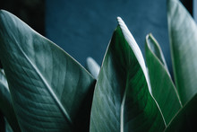 Dark Green Palm Leaves Against Gray Wall. Minimalism Interior Concept