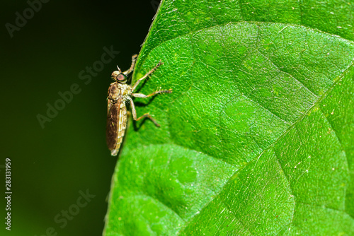 Fotomural  The insectivorous gadfly perches on the field plants