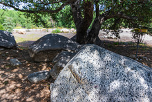 Large Granite Boulders And Rocks In Dappled Sunlight Under Live Oak Tree