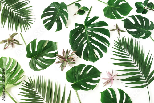 Pinturas sobre lienzo  tropical green palm, monstera leaves , branches pattern isolated on a white background