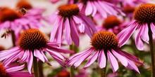 Close Up Of A Beautiful Pink C...