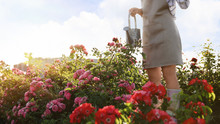 Woman With Watering Can Near R...