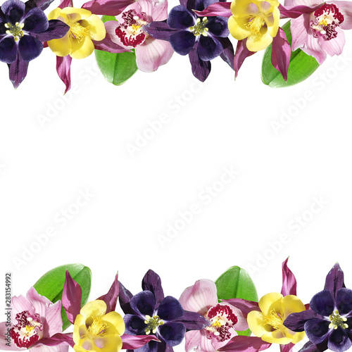 Fotografija Beautiful floral background of Orchid and Aquilegia. Isolated