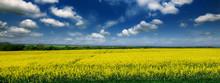 Beautiful Yellow Field Of Rape