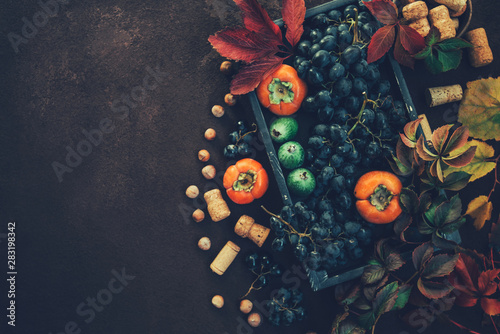 Zbiór winogron. Vintage drewniane pudełko z jesiennych zbiorów świeżo zebranych czarnych winogron. Dojrzałe winogrona i liście jesienią. Smaczne winogrona na tło.