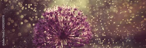 Deurstickers Waterlelies Abstract flower macro photo with drops. Artistic Background for desktop. Magic Floral Art banner. Creative Wallpaper.