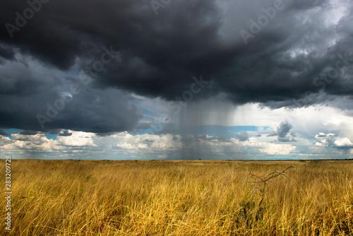 Cuadros en Lienzo Namibie, Etosha Park