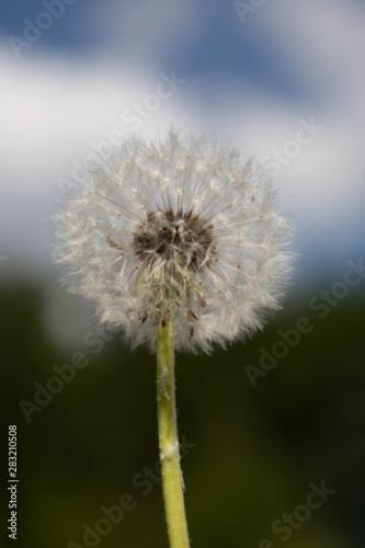 Photo  nature -  plants