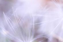 Abstract Light Fluff Blur Background