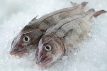Fresh Raw Whole Haddock Fish