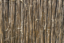 A Background Of Dry Reeds Drawn By Wire. Gray Fence Of Dry Stems. Dry Thin Reed In The Wall. Reed Texture Close Up