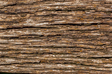 Texture Of Old Oak Tree Bark
