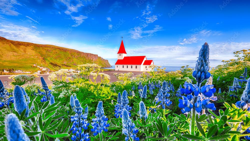 Fototapety, obrazy: Splendid view of Vikurkirkja christian church in blooming lupine flowers