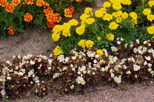 Photo Yellow and orange marigolds, Natural. White flowers