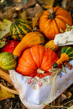 Pumpkins In Basket. Autumn Har...