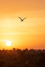 A Bird In Silhouette At Sunris...