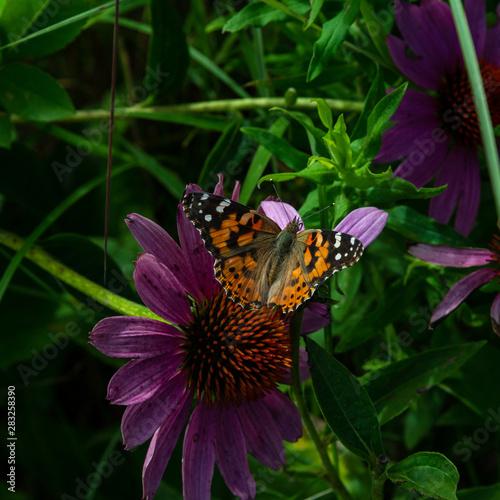 015-butterfly-wdsm-02aug19-09x09-006-500-2685