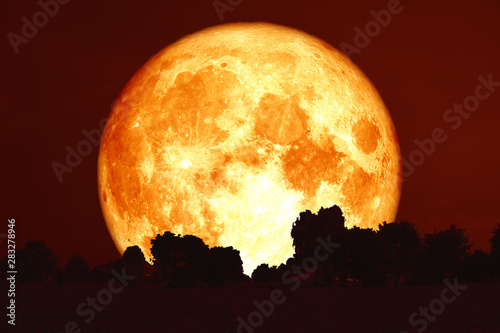 Photo full harvest blood moon on red sky and silhouette trees