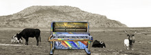 Surreal Old Jass Piano With Cows.