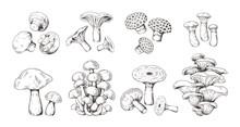 Hand Drawn Mushrooms. Vintage Sketch Of Shiitake Champignon Fungus Chanterelle, Isolated Organic Food. Vector Doodle Illustration Fresh Forest Plants Set