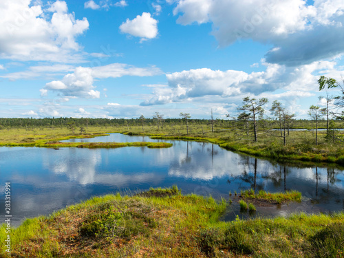Staande foto Bleke violet cloudy and very windy day in the bog, many small lakes and beautiful reflections, sunny day, Nigula bog, Estonia