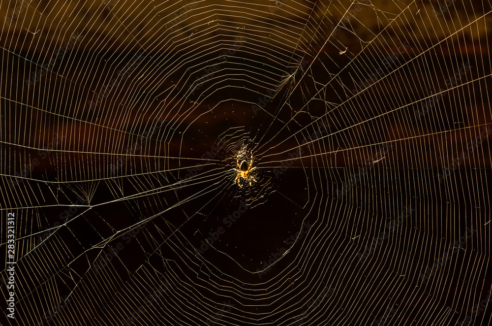 Fotografía  Glowing spider net with a house spider in the center close-up on a dark backgrou