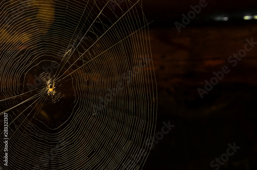 Cuadros en Lienzo  Glowing domestic house spider in the corner close-up on a dark background with s