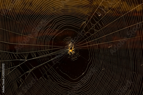 Cuadros en Lienzo  Glowing spider net with a house spider in the center close-up on a dark backgrou
