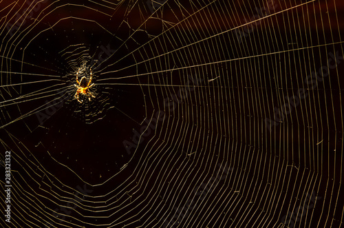 Fotografía  Glowing domestic house spider in the corner close-up on a dark background