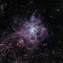Tarantula Nebula (NGC2070)