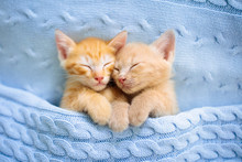 Baby Cat. Ginger Kitten Sleepi...