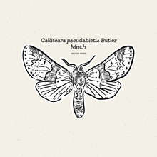 Calliteara Pseudabietis Butler Is A Moth Of The Family Erebidae.