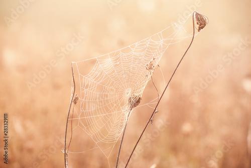 Fotografia Autumn dry plant
