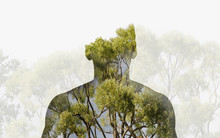 Double Exposure Silhouette Head Portrait Of A Thoughtful Man Combined With Photograph Of Forest Landscape.