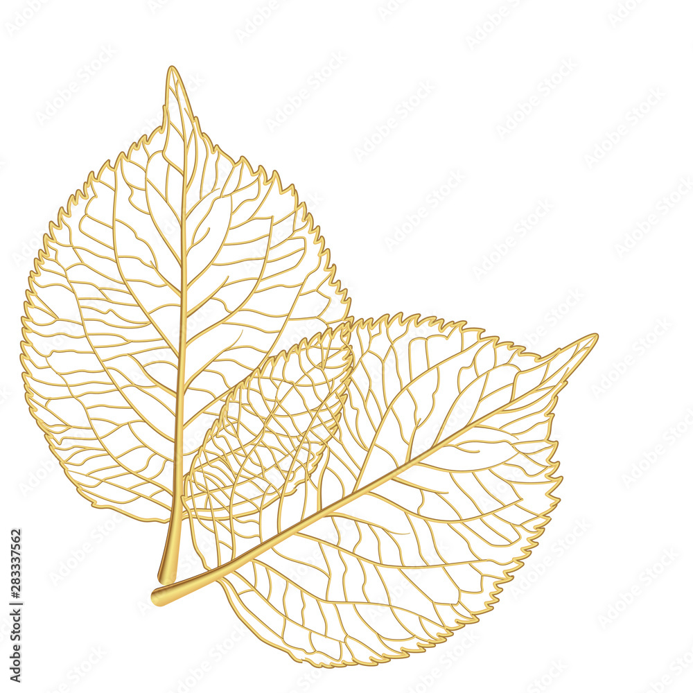 Fototapety, obrazy: Leaf isolated. Vector illustration. EPS 10