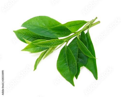 Green tea leaf isolated on white background Fototapete