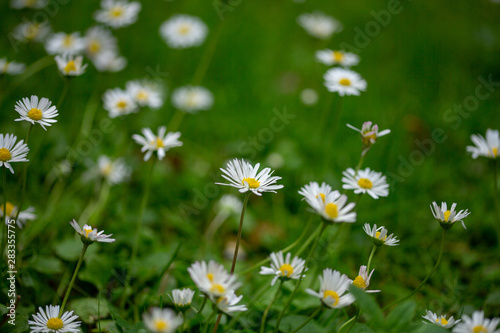 Photo Stands Daisies madeliefjes