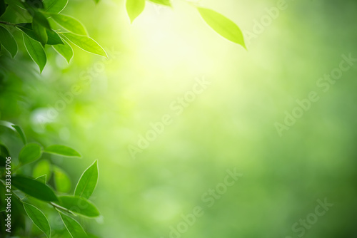 Poster Printemps Closeup nature view of green leaf on blurred greenery background in garden with copy space using as background natural green plants landscape, ecology, fresh wallpaper concept.