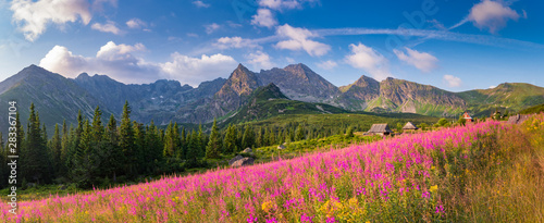 mountain landscape, Tatra mountains panorama, Poland colorful flowers and cottages in Gasienicowa valley (Hala Gasienicowa), summer - 283367104