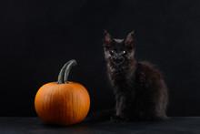 Halloween Cat And Pumpkin On Black Background