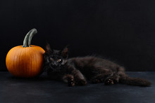 Halloween Cat And Pumpkin On Black Background