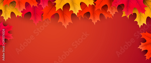 Obraz Autumn background with colorful maple leaves. - fototapety do salonu