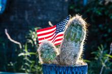 American Flag Flies In A Plant...