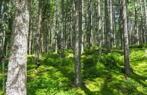 Foto op Plexiglas Panoramafoto s Wald Motiv mit Bäumen auf Moos Untergrund